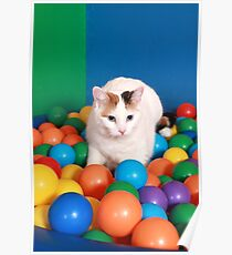 Cat Playing in balls Poster