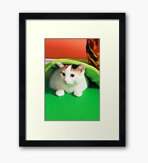 Hide and seek playing cat Framed Print