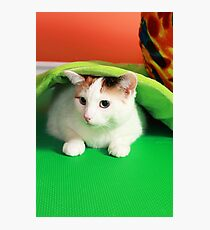 Hide and seek playing cat Photographic Print