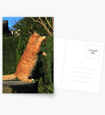 Tai chi cat Postcards