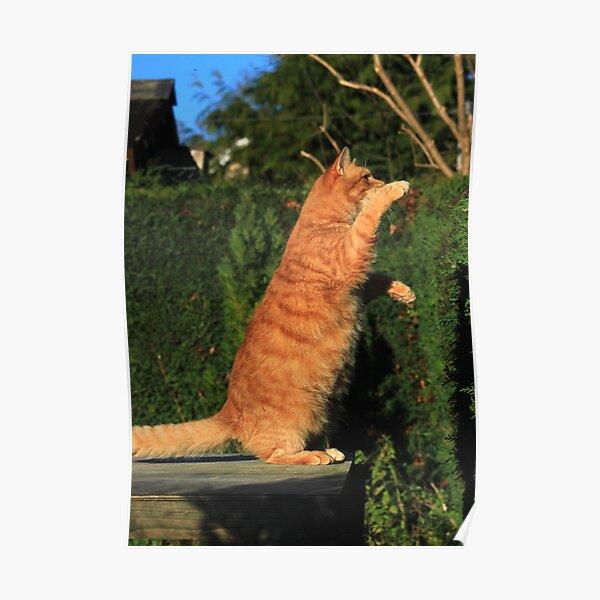 Tai chi cat Poster