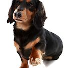 Dog showing Paw by Dagoth