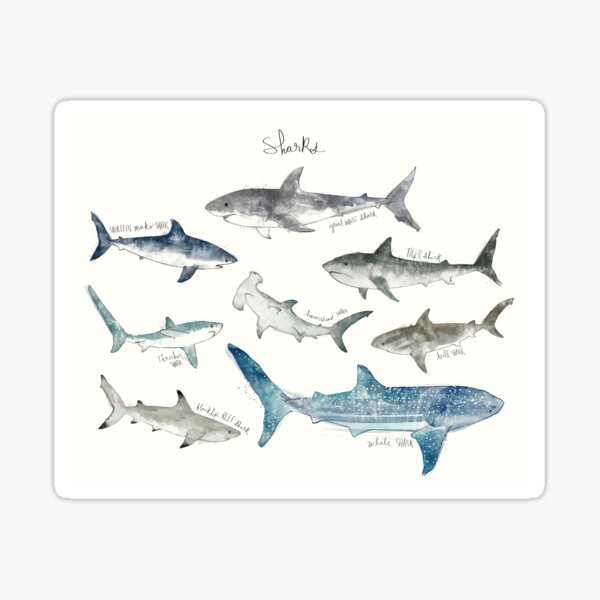 Sharks - Landscape Format Sticker