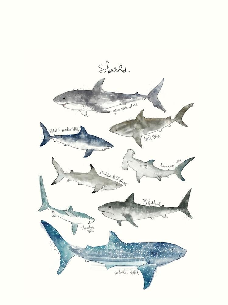 Tiburones - Formato del paisaje de AmyHamilton