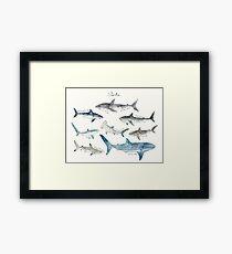 Sharks - Landscape Format Framed Print