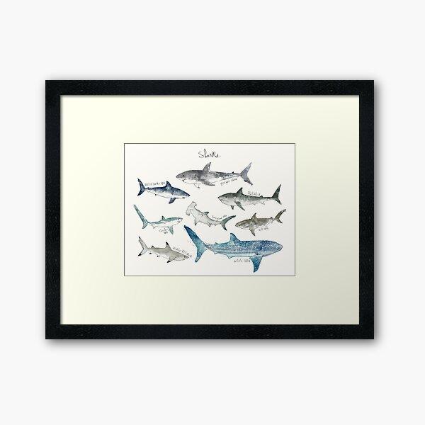 Sharks - Landscape Format Framed Art Print