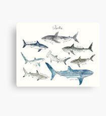 Sharks - Landscape Format Canvas Print