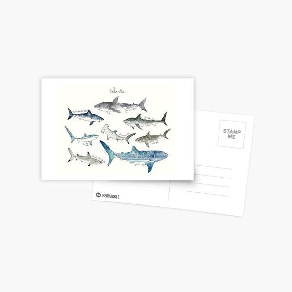Sharks - Landscape Format Postcard