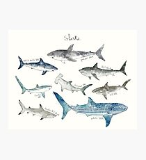 Lámina fotográfica Tiburones - Formato del paisaje