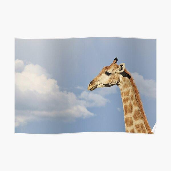 ** GIRAFFE HEADS MEET **  Digital image  Wallpaper Screensaver Home Decor