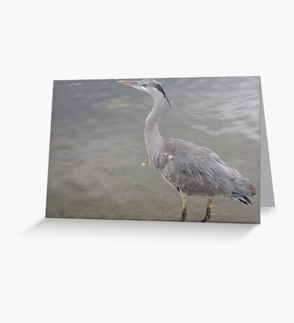 Into the Presence of Still Water Greeting Card