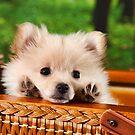 Pic Nic Dog by Dagoth