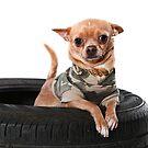 Tire Dog by Dagoth