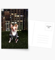 Boxing Dog Postcards