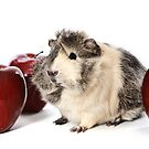 Guinea Pig Love Apples by Dagoth