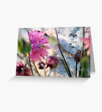 'Clementine Rose' Columbine on Last Day of Spring Greeting Card