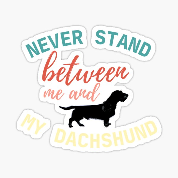 Never stand between me and my Dachshund - Color on White Sticker