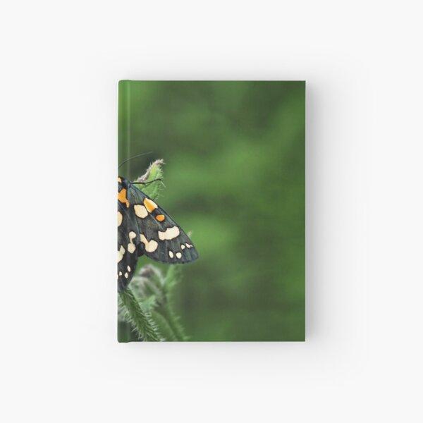 Scarlet Tiger Moth - Callimorpha Dominula Hardcover Journal