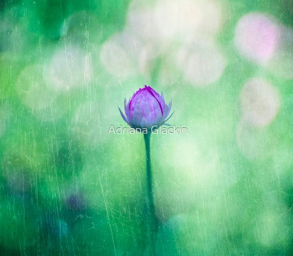 ~ one ~ by Adriana Glackin