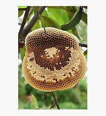 Bees on honeycomb Photographic Print