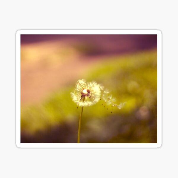 Dandelion in the wind Sticker