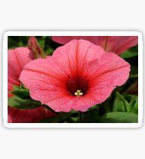 Pink Petunia Sticker