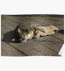 Grey cat sleeping with toy fish Poster
