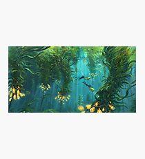 Lámina fotográfica Explorando el bosque Kelp