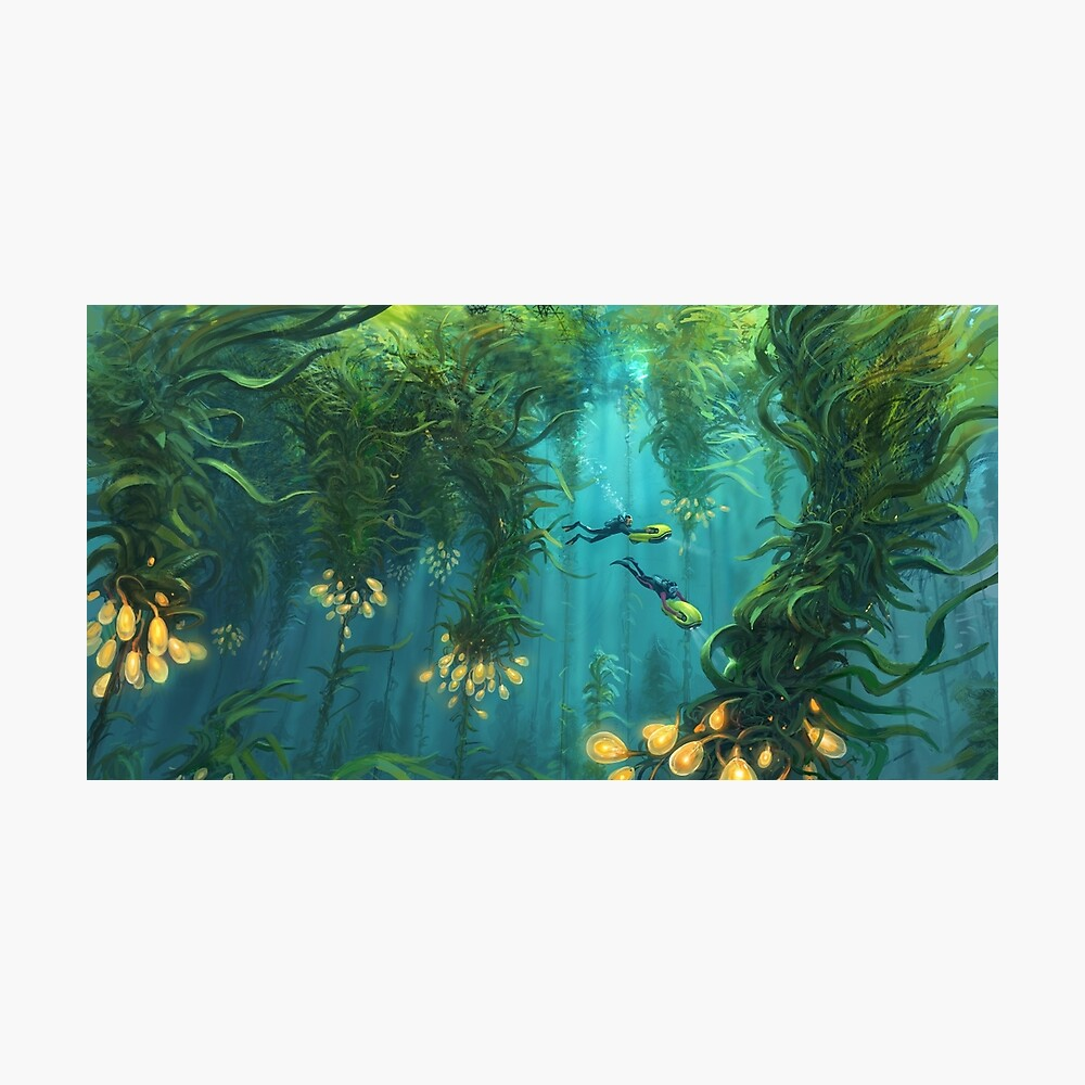 Explorando el bosque Kelp Lámina fotográfica