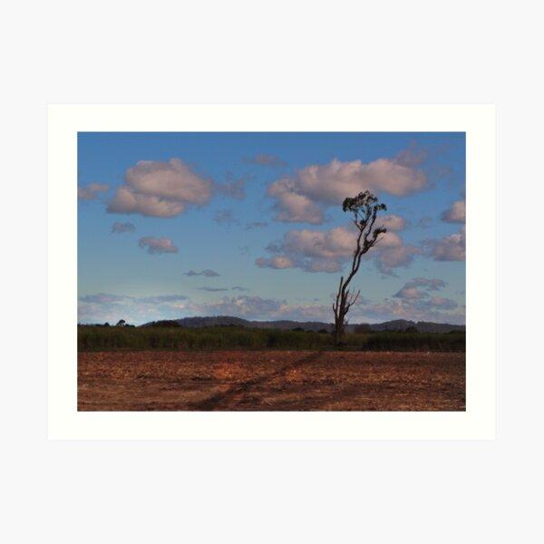 Standing alone in a cane field Art Print