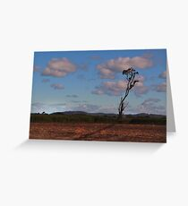 Standing alone in a cane field Greeting Card