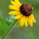 YELLOW SIMPLICITY -  EENVOUD IN GEEL by Magriet Meintjes