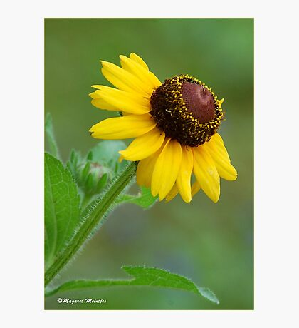YELLOW SIMPLICITY -  EENVOUD IN GEEL Photographic Print