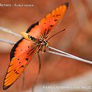BUTTERFLY SERIES - Lycus Acreae by Magriet Meintjes