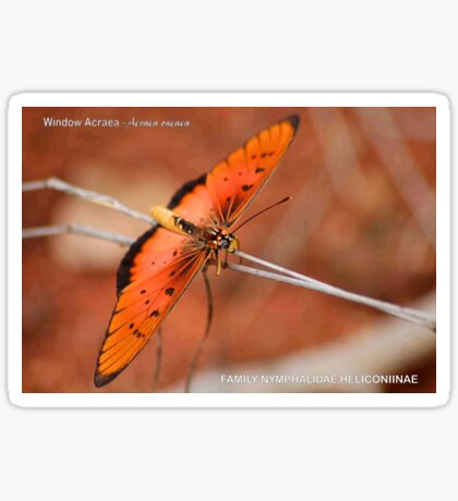 BUTTERFLY SERIES - Lycus Acreae Sticker