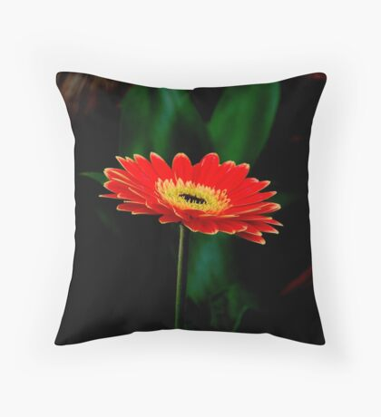 IN THE SHADE - The Barberton Daisy - Gerbera jamesonii  Throw Pillow