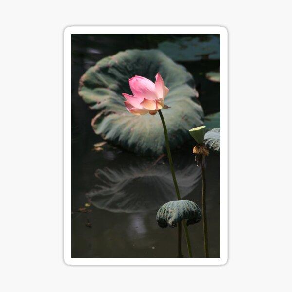 Lotus - 1 Sticker