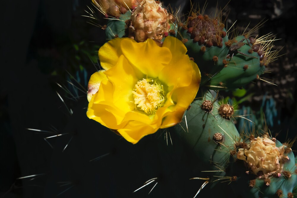Pretty and Prickly by Dennis Reagan
