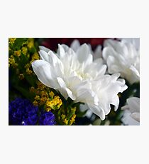 White flower macro, natural background. Photographic Print