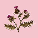 Thistle, Rust on Pink  by ThistleandFox