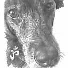old black dog closeup drawing by Mike Theuer