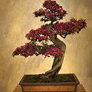 Bonsai Tree by Jessica Jenney
