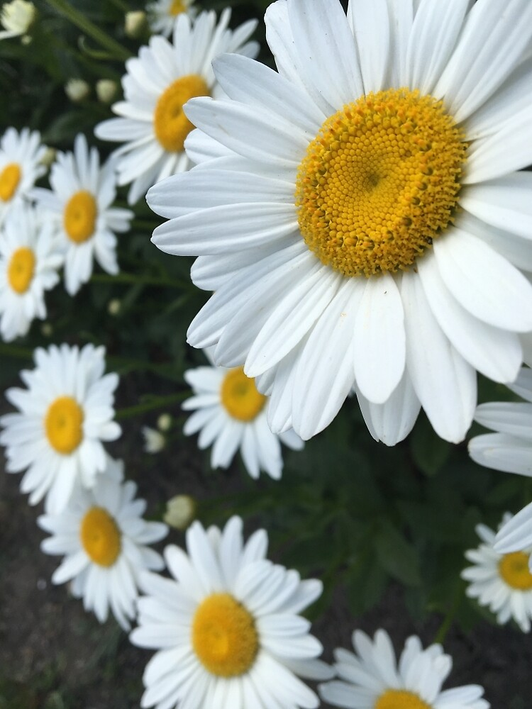 Flowers by BHighland