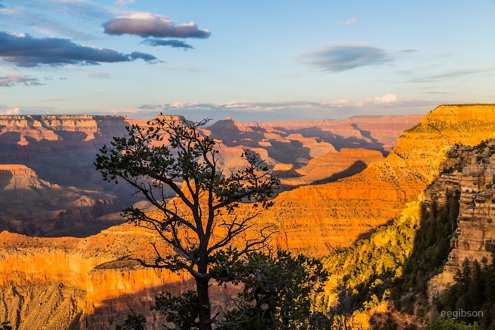 Grand Canyon - Pine Tree Silhouette by eegibson