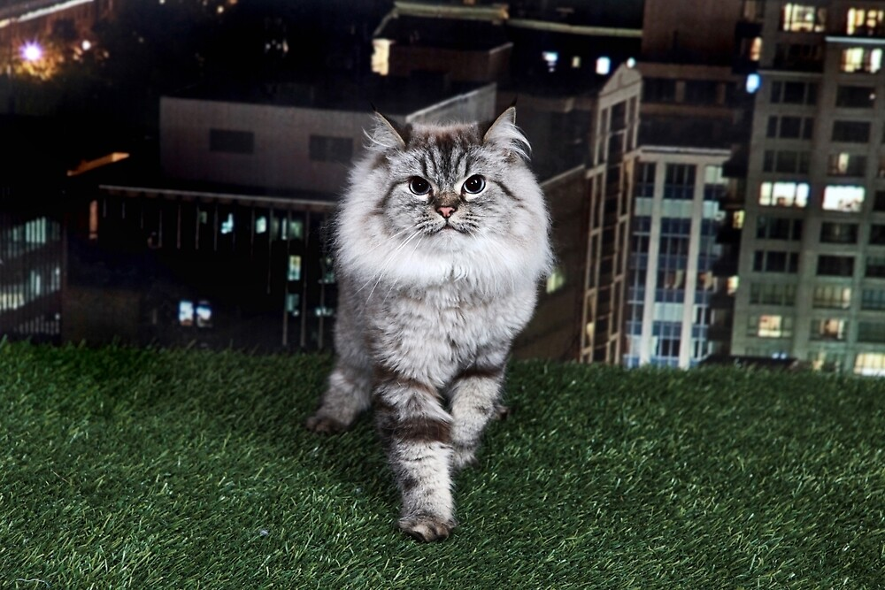 City Cat on Grass by Dagoth