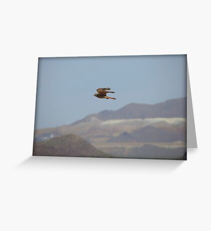 American Kestrel in Flight Greeting Card