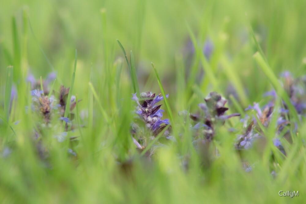 wildflower by CallyM
