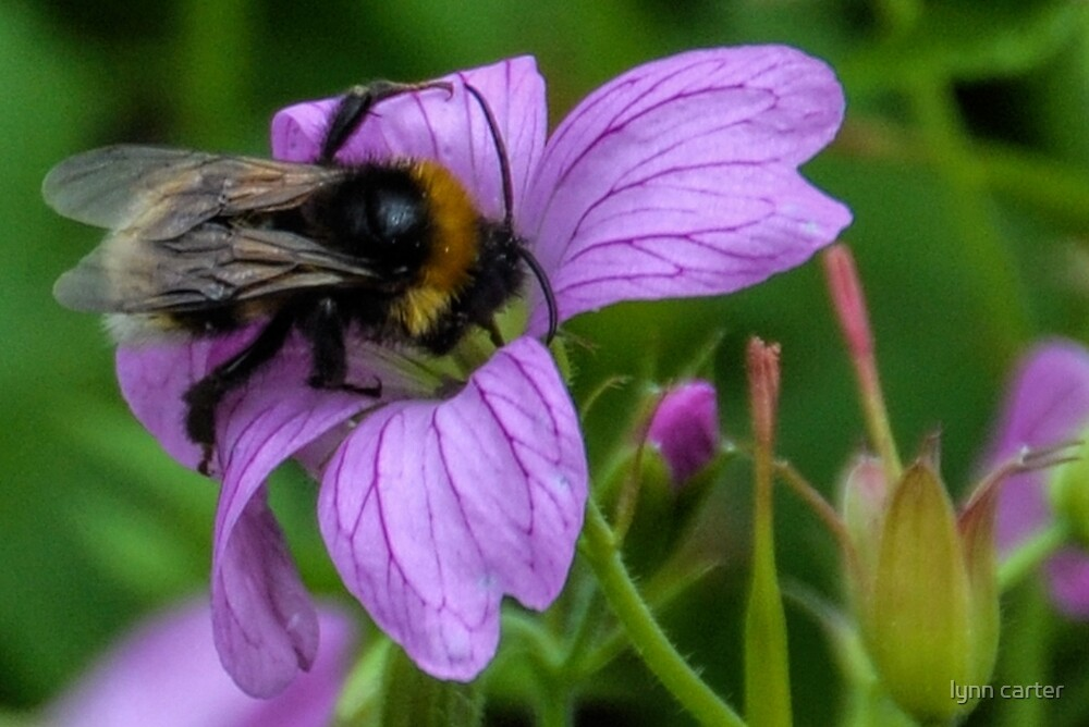 A Bee or not a Bee...........Dorset UK by lynn carter