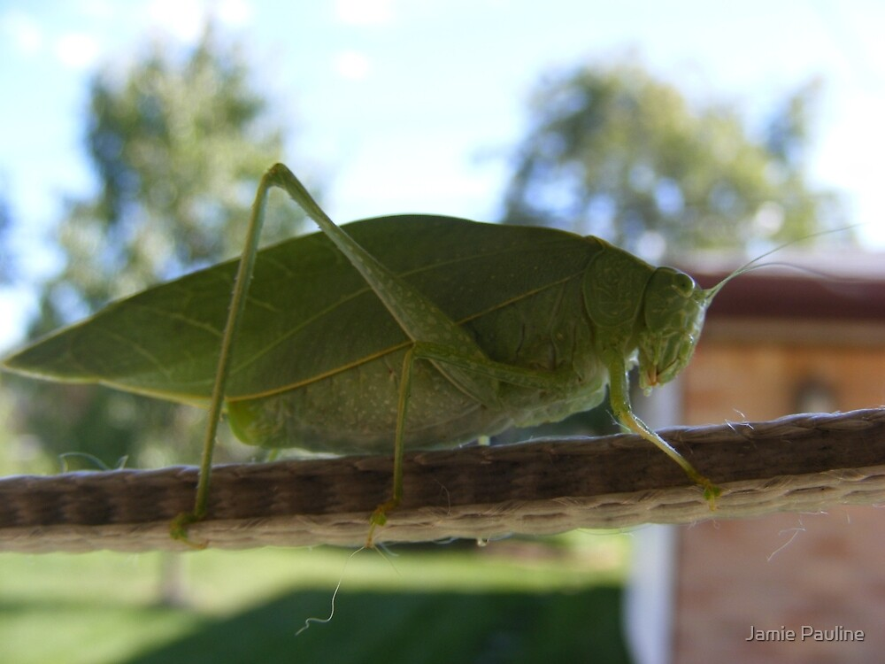 Katydid in Summer by Jamie Pauline