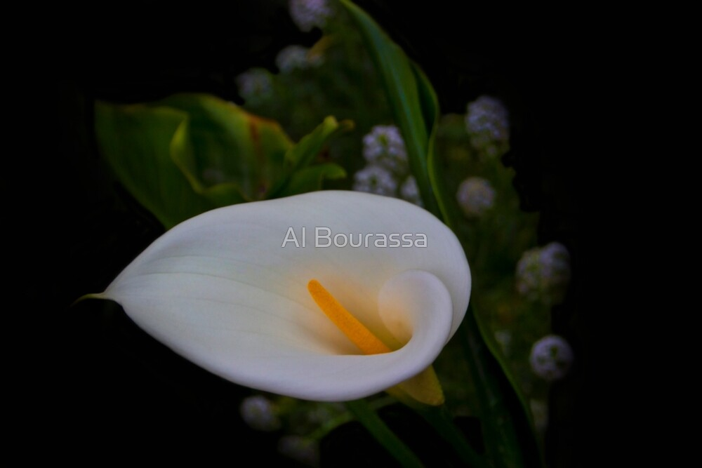 Calla In The Garden II by Al Bourassa